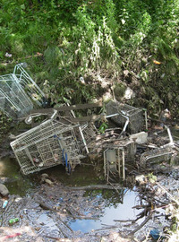 Trollies_birch_green_2_4