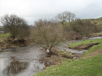Waterborne_litter_in_trees_at_hog_4