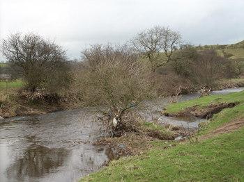 Waterborne_litter_in_trees_at_hog_4